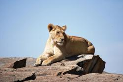 Serengeti Lion Rock